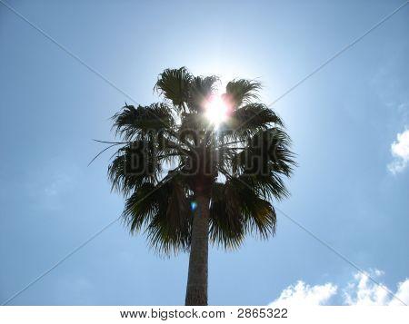 Palm Tree And A Sky