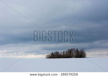 A Small Group Of Dark Trees In An Open Winter Field.