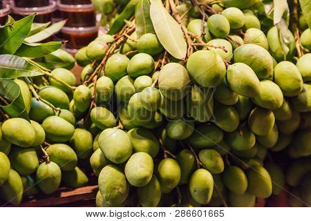 Fresh Wild Natural Tropical Asian Green Raw Unripe Mangoes Juicy Stone Fruit (drupe) From Garden On