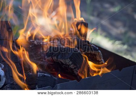 Burning Firewood In Fire Flame In Brazier. Outdoor Recreation Concept.