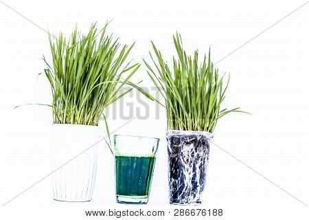Wheatgrass And Its Extract/juice Isolated On White.wheatgrass Is The Freshly Sprouted First Leaves O