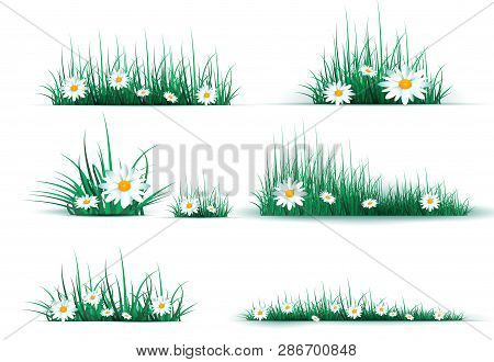 Green Grass On A Transparent Background. Glade In The Forest Grass. Chamomiles On The Glade.