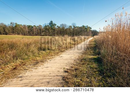Sandy Path Along The Reeds On The Bank Of A Ven In The Dutch Nature Reserve Galderse Heide Near The