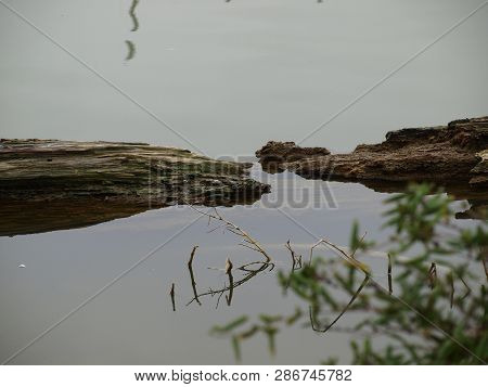 A Couple Of Logs Drifted Into An Alcove And Were Caught By The Reed Beds Below. It Is A Peaceful And