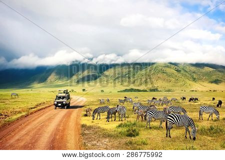 Wild Nature Of Africa. Zebras Against Mountains And Clouds.  Safari In Ngorongoro Crater National Pa
