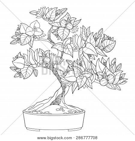 Vector Outline Bougainvillea Or Buganvilla Bonsai Tree In Flowerpot With Flower, Leaf And Bud In Bla