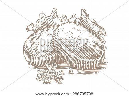 Drawing Of Two Roasted Rissoles With Fresh Lettuce And Parsley