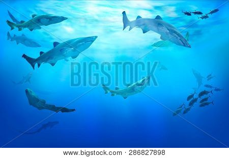 Life in tropical waters. Hunting sharks. Shoal of fish. 3D illustration.