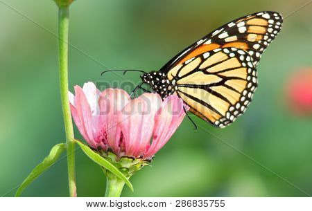 Close up shot of Butterfly on the flower