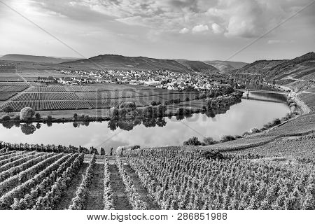 Famous Moselle Sinuosity In Trittenheim, Germany In Black And White