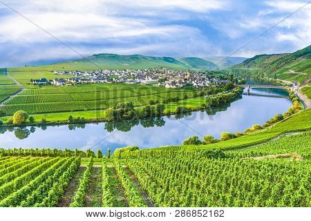 Famous Moselle Sinuosity In Trittenheim, Germany With Vineyards