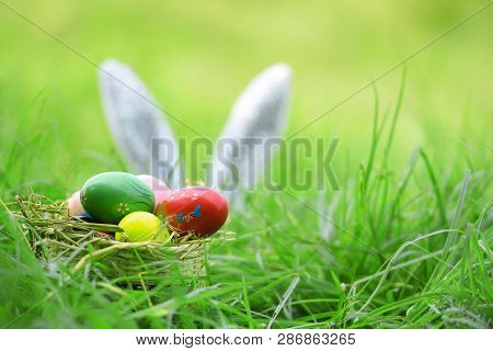 Easter Bunny And Easter Eggs On Green Grass Outdoor / Colorful Eggs In The Nest Basket And Ear Rabbi