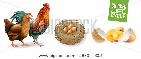 Chicken Life Cycle Realistic Horizontal Set  With Hen Rooster Fertile Eggs And Newly Hatched Chick V