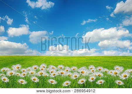 Beautiful spring field with flowers.Great as a background