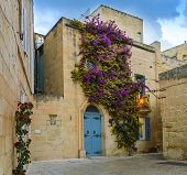 Mdina, Malta: traditional Maltese house with artistic doors, bright flowers of purple bougainvillea on the limestone wall and lantern lights. Medieval Maltese architecture poster