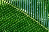 Leaf of a palm tree. A pattern poster