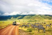 Wild nature of Africa. Zebras against mountains and clouds.  Safari in Ngorongoro Crater National park. Tanzania. poster