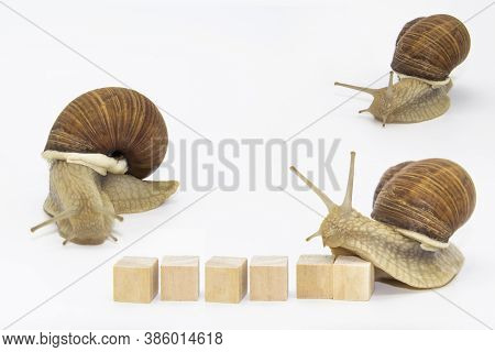 Set Of Various Position Of Grape Snails Isolated On White Background. Three Beautiful Grape Snails.
