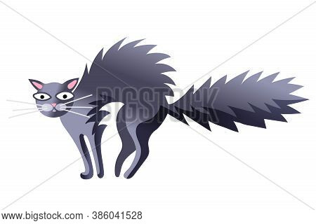 Scared Fluffy Cat With Long Whiskers. Funny Grey Kitten Bristle Wool On Back And Tail Looking At Vie