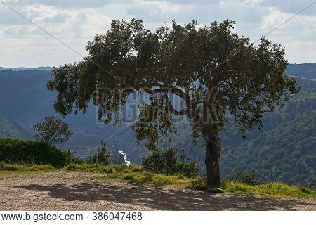 Beautiful Olive Tree In Pulo Do Lobo Waterfall With River Guadiana In Mertola Alentejo, Portugal