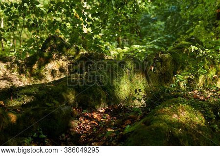 Mossy Tree Roots On A Trail In A Semi-dark Subtropical Forest