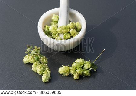 Fresh Green Hops A Component For Brewing Beer