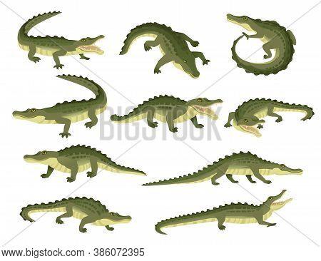 Set Of Green Crocodile Character Big Carnivore Reptile Cartoon Animal Design Flat Vector Illustratio