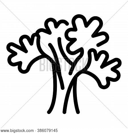 Parsley Bunch Icon. Outline Parsley Bunch Vector Icon For Web Design Isolated On White Background