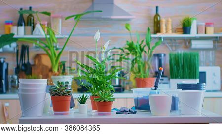 Decorating With Houseplants On Kitchen Table. Using Fertil Soil With Shovel Into Pot, White Ceramic