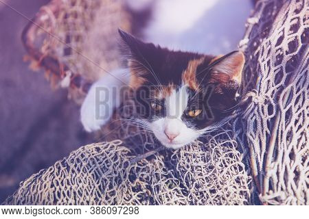 Funny Little Kitten In Calico Color Sleeping Outdoors In Fishing Net