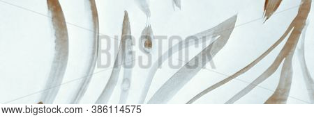 Ocean Composition. Indian Wallpaper. Greyscale Botanical Poster. Modern Fabric.  Monochrome Grey And