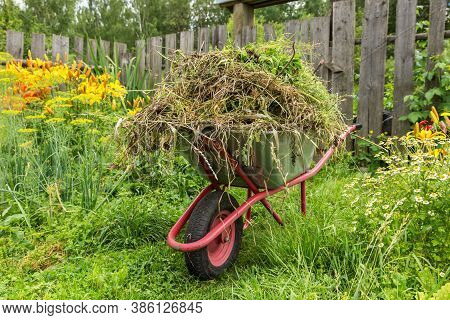 Garden Cart In The Kitchen Garden Filled With Cut Grass. Cleaning Weeds In The Garden.