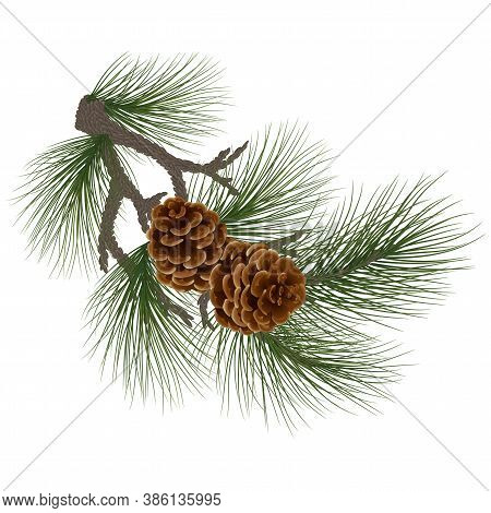 New Year Holidays Concept. Green Pine / Spruce Branches With Cones. Cones On The Branches, Close-up.