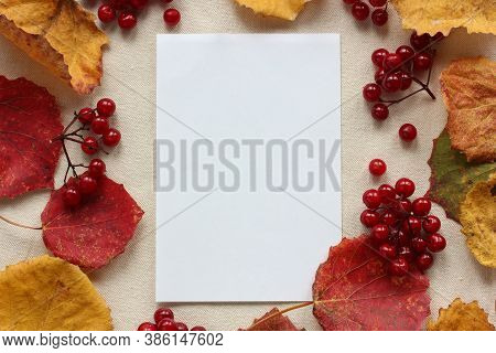 Mockup, Scene Creator. Autumn Background With Copying Space. Empty Sheet Of Paper, Clusters Of Vibur