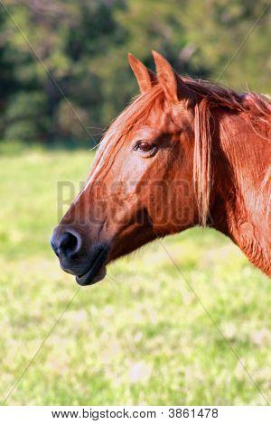 Sunburt Horse