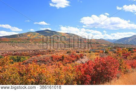 Colorful bushes during autumn time near Aspen, Colorado