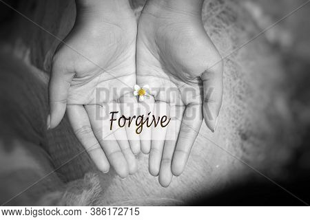 Hands Holding A Little Daisy Flower With Single Word Card Written Forgive. Forgiveness Concept On Bl