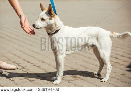 Volunteer Comforting Little Stray Dog In Sunny Street, Homeless Doggy