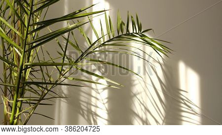 Morning Sun Lighting The Room, Shadow Background Overlays. Transparent Shadow Of Tropical Leaves. Ab