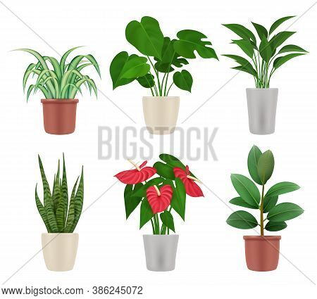 Decorative Plants. Home Flowers In Pots Colorful Botanical Illustrations Vase With Plants Vector Set