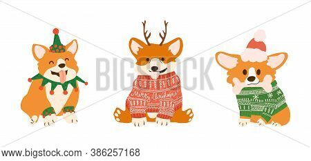 Vector Christmas Postcard With Cute Corgi In Ugly Sweaters And Deers Antlers. Smiling Dogs For Xmas
