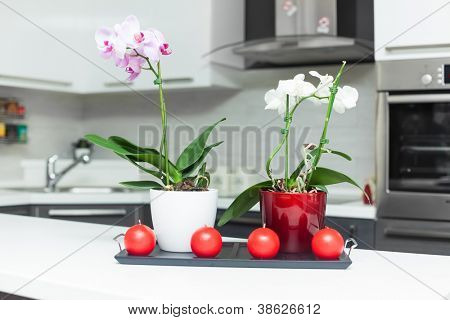 Purple and white orchids in modern kitchen
