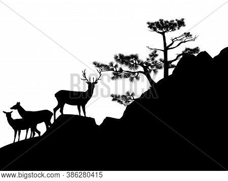 Wild Deer Herd With Stag Standing On Pine Tree Covered Rock Cliff - Black And White Vector Silhouett