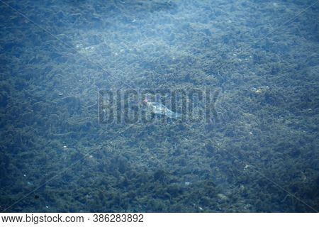 Human Contamination And Pollution Concept, Plastic Bottle Lying Underwater On The Bottom Among Seawe