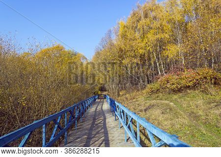 Trees With Yellowed Foliage On The Side Of A Ravine. Sunny Day In October. Landscape Reserve Teply S