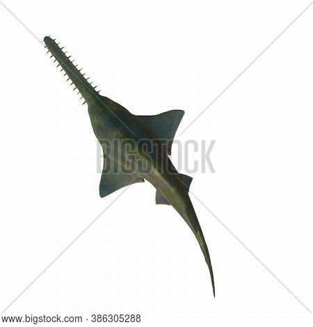 Onchopristis Sawfish Overview 3d Illustration - This Predatory Shark Onchopristis Sawfish Lived In T