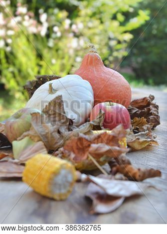 Various And Colorful Autumnal Vegetables And Fruits In Leaves  On Wooden Background In Garden