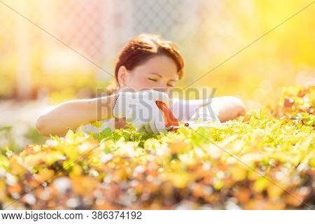 Happy Gardener Woman Worker Trimming Bushes And Shrubs With Hedge Shears In Garden Tidy