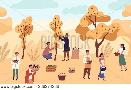 Group Of Farmer People Picking Seasonal Fruits From Trees At Garden Vector Flat Illustration. Man An