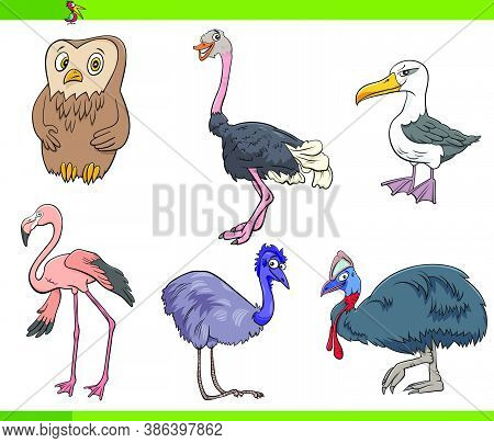 Cartoon Illustration Of Birds Species Animal Characters Set